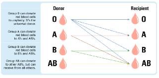 Blood donor recipient